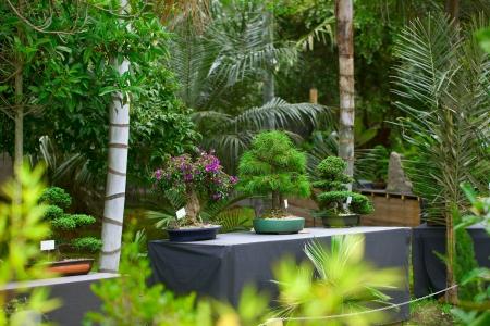 bonsais exhibition in a botanical garden Stock Photo - 18817252