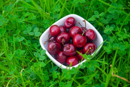 Cherries in a ceramic bowl on green grass photo