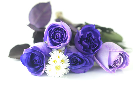 bouquet of beautiful violet roses