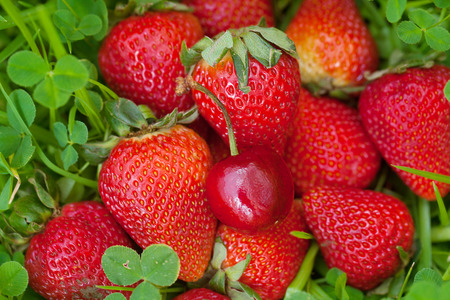 strawberries and cherry lying on green grass