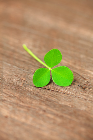 clover on a wooden surface