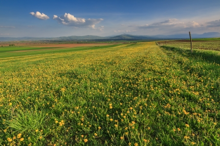 seasonic: Field of yellow flowers and blue cloudy sky Stock Photo