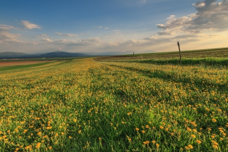 Spring landscape and yellow flowers photo
