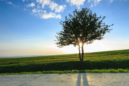 seasonic: The classic picture of spring,lonely tree and green field Stock Photo