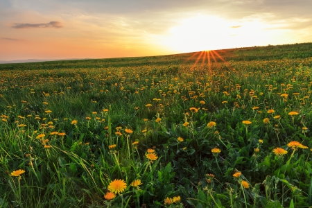 seasonic: Spring landscape and yellow flowers