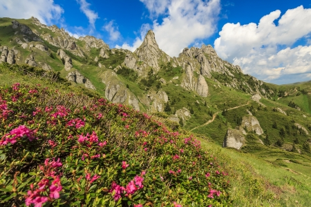 Beautiful mountain flowers and summer landscape in Ciucas mountains,Romania photo