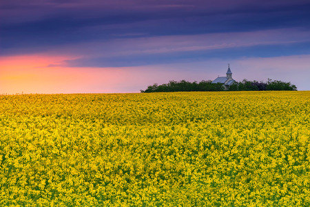seasonic: Summer landscape with a field of canola at sunset,Transylvania,Romania,Europe Stock Photo