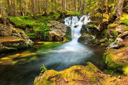 Deep forest and cascade waterfall in Retezat National Park, Carpathians, Romania photo