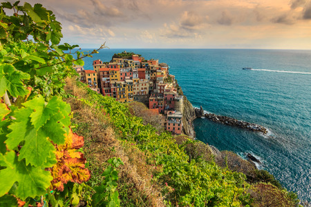 The famous wineyard and beautiful riviera of Cinque Terre,Manarola town,Italy,Europe