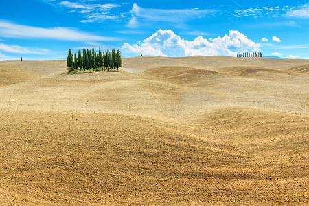san quirico: Farmland rural landscape and,cypress trees in Tuscany near San Quirico dOrcia,Italy,Europe