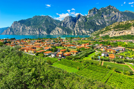garda: Lake Garda and vineyards near Torbole town,South Tyrol,Italy,Europe