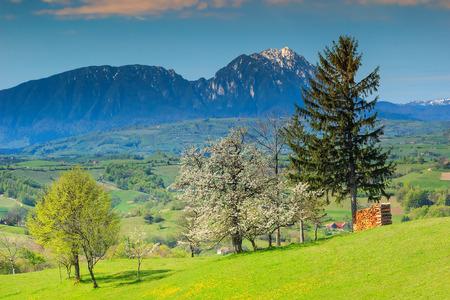 transylvania: Spring landscape and Piatra Craiului mountains in background,Transylvania,Holbav,Romania,Europe Stock Photo