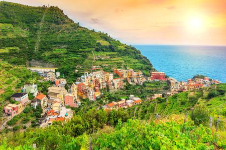 viñedo: Impresionante valle de viñedos, puesta del sol mágica y hermosa costa de Cinque Terre, la ciudad de Manarola, Italia, Europa