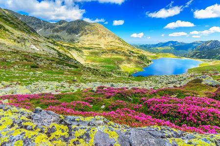 Lago glaciar, altas montañas y espectaculares flores de color rosa rododendro, el Parque nacional Retezat, Cárpatos, Rumania, Europa