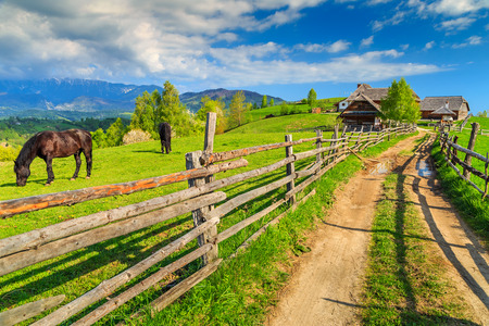 Alpine rural landscape with grazing horses on the green fields,Bran,Transylvania,Romania,Europe