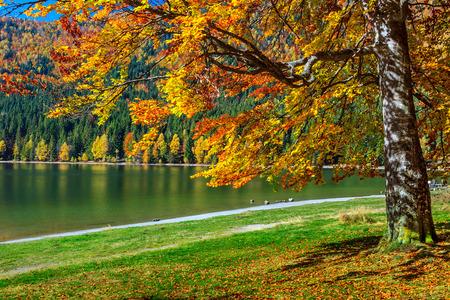 otoñales: Paisaje del bosque del otoño y famoso lago volcánico en Transilvania, Santa Ana Lago, Rumania, Europa Foto de archivo