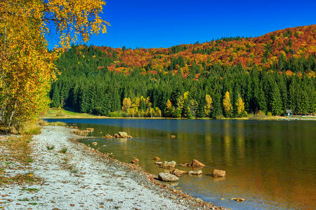 beach landscape: Autumn forest landscape and stunning famous volcanic lake in Transylvania,St Anna Lake,Romania,Europe