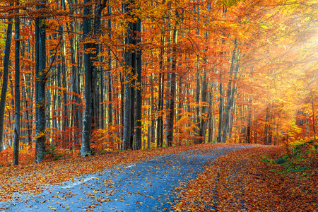 autumn landscape: Majestic autumn forest landscape with romantic road and rays of sunlight
