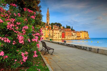 banc de parc: Magnifique vieille ville romantique de Rovinj avec de belles fleurs de lauriers roses, péninsule istrienne, Croatie, Europe