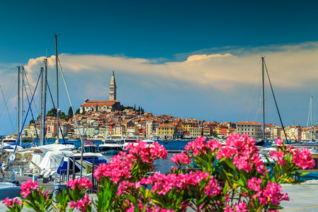 city park boat house: Wonderful romantic old town of Rovinj with beautiful pink oleander flowers,Istrian Peninsula,Croatia,Europe