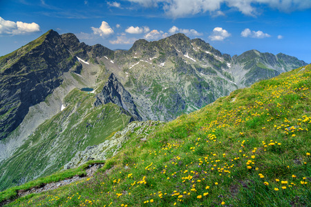 champ de fleurs: Beautiful mountain ridges and spring flowers field with Negoiu peak in background,Fagaras mountains,Carpathians,Romania,Europe