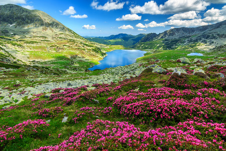 Alpine glacier lake,high mountains and stunning pink rhododendron flowers,Retezat National Park,Carpathians,Romania,Europe