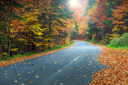 Wonderful autumn forest landscape with romantic road and rays of sunlight Stock Photo