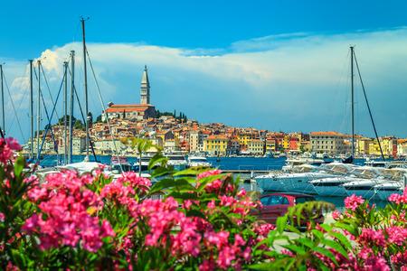 Amazing romantic old town of Rovinj with beautiful pink oleander flowers, Istrian peninsula, Croatia, Europe