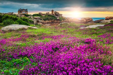 ピンクの花崗岩の海岸、ブルターニュ、フランス、ヨーロッパでペロス-ギレックに色とりどりの花で魔法の夕日