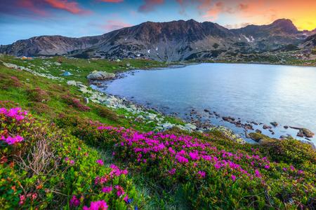 Amazing sunset landscape, famous camping place near alpine Bucura lake. Pink rhododendron mountain flowers and colorful sky with glacier lake, Retezat mountains, Carparhians, Transylvania, Romania, Europe Stock Photo