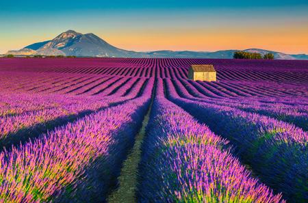 Majestätische bunte Lavendelfelder nahe touristischem Dorf Valensole, Provence-Region, Frankreich, Europa