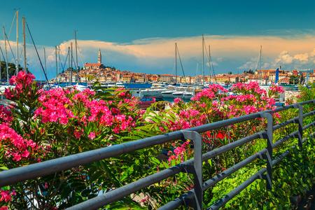 Fantastic romantic old town of Rovinj with beautiful pink oleander flowers, Istrian peninsula, Croatia, Europe Stock Photo