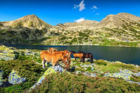 Beautiful summer landscape, horse herd in field near Bucura alpine lake. Mare and foal grazing in Retezat mountains, Carpathians, Transylvania, Romania, Europe Foto de archivo