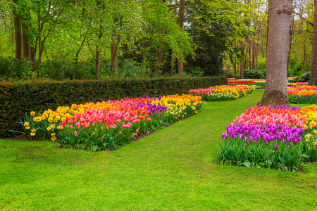 Beautiful spring landscape, stunning Keukenhof garden with colorful fresh tulips, spring flowers and spectacular flower beds, Netherlands, Europe 스톡 콘텐츠