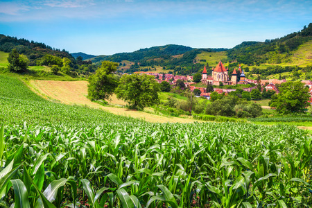 Fantastic touristic destination. Green maize plantation, corn field on agricultural area and famous saxon fortified church with Transylvanian village, Biertan, Transylvania, Romania, Europe 스톡 콘텐츠