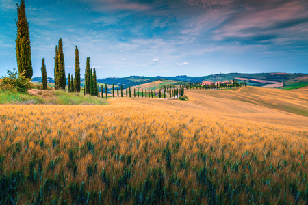 Beautiful summer landscape in Tuscany. Stunning ripe grain fields and winding road with cypresses near Siena, Tuscany, Italy, Europe