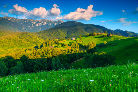 Wonderful summer alpine landscape with green fields and high mountains at sunset, Bran, Transylvania, Romania, Europe
