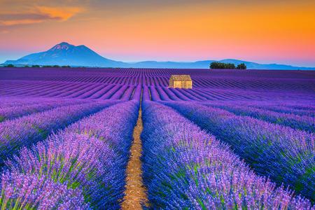 Malerische Sommernaturlandschaft und Landwirtschaftsgebiet. Beliebter Reise- und Fotografieort mit wunderschönen lila Lavendelfeldern bei Sonnenuntergang, Valensole, Provence, Frankreich, Europa Standard-Bild