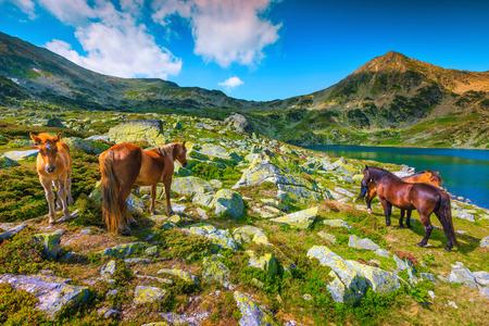 Panoramasommerlandschaft, Pferdeherde auf der Weide in der Nähe des Alpensees Bucura. Stute und Fohlen grasen in der Nähe von touristischem Teich, Retezat-Gebirge, Karpaten, Siebenbürgen, Rumänien, Europa Standard-Bild