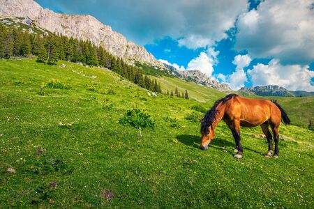 Mountain landscape with pasture and grazing horse, Bucegi mountains, Carpathians, Romania, Europe