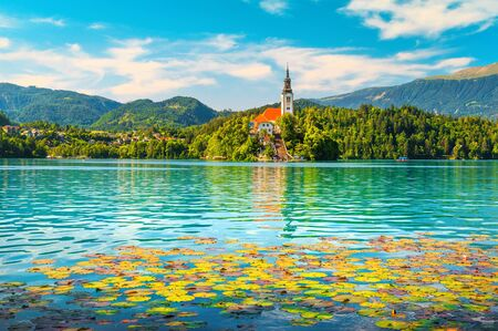 Amazing pink lotus blossom on lake. Beautiful water lily flowers and famous Pilgrimage church on the small island in background, lake Bled, Slovenia, Europe Imagens - 129683934