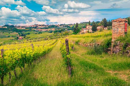 Amazing grape rows and green vineyards. Agricultural area with grapes and farmhouses. Tuscany cityscape with Panzano in Chianti city on the hill, Italy, Europe Banco de Imagens