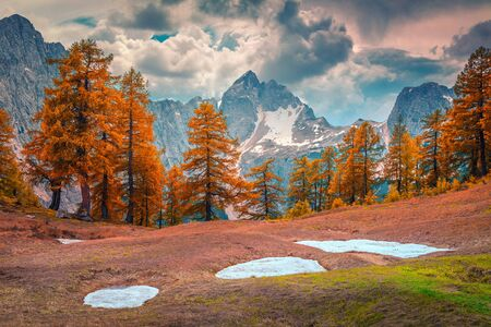 Spectacular alpine autumn landscape with orange larch forest and high snowy mountains, near Kranjska Gora, Julian Alps, Slovenia, Europe