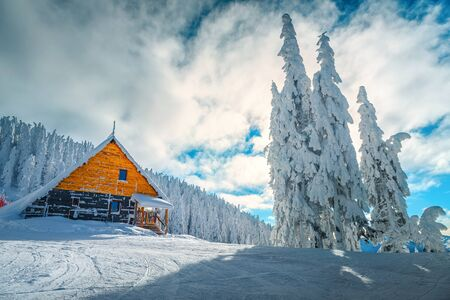 The best famous winter ski resort in Romania. Stunning touristic and winter vacation place. Snowy pine trees after blizzard in Poiana Brasov ski resort, Transylvania, Romania, Europe