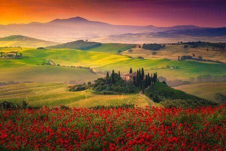 Erstaunliche ländliche Landschaft der Toskana mit roten Mohnblumen in den Getreidefeldern. Blumenwiesen und neblige Täler bei Sonnenaufgang in der Toskana, in der Nähe von Pienza, Italien, Europa