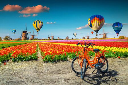 Agricultural landscape with colorful tulip fields and rustic old windmills. Fantastic travel concept with colorful hot air balloons over the tulip fields, Kinderdijk, Netherlands, Europe