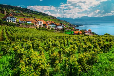 Admirable terraced vineyard with Lake Geneva in background. Fantastic place with vineyards and vine rows in Lavaux wine region, near Chexbres village, Rivaz, Canton of Vaud, Switzerland, Europe