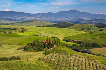 Picturesque summer scenery with rural road in the grain fields. Countryside Tuscan landscape and olive plantation on the hill, Italy, Europe Imagens