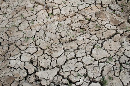 arid: arid
