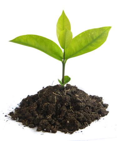 sostenibilidad: crecimiento